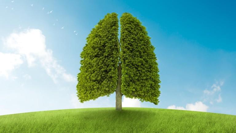 Welchen Effekt haben negativeIonen auf den Menschen?  ErhöhteSauerstoffaufnahme für die Lungen, Blut & Stoffwechsel